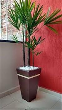 vaso plantado
