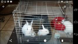 Vendo coelhos grandes e filhotes