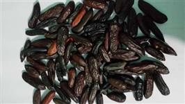 sementes de cumaru