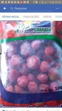vendemos morangos congelado e in natura