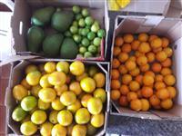 Compro abacate laranjas mangá limão