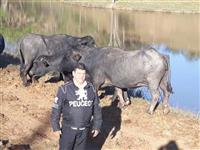 Queijos de búfala