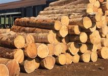 Toras de Eucalipto e Pinus para entrega em itajai ou itapoa