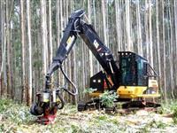 Colheita Florestal - Pinus e Eucalipto