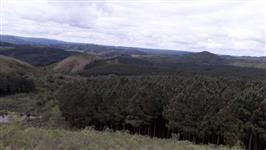 Vendo Pinnus Taeda, 280 hectares