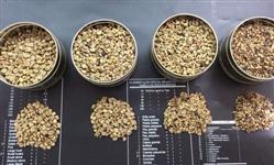 Café Escolha e Fundo da Peneira 10 para Torrefação - Consumo Interno