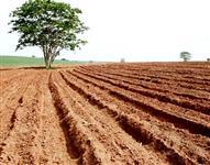 Iniciar plantação Amendoim