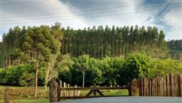 Floresta de eucalipto 10 hectares