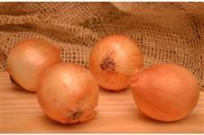 procuro produtor de cebola