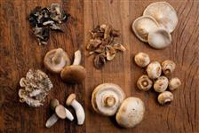 Shalon cogumelos .. pertinho de voce .. curitiba e regiao metropolitana ..