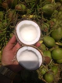 Vendo coco verde de qualidade e cocô seco