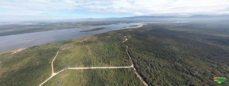 Grande área para reflorestamento