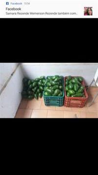 Estou procurado abacate e tomate