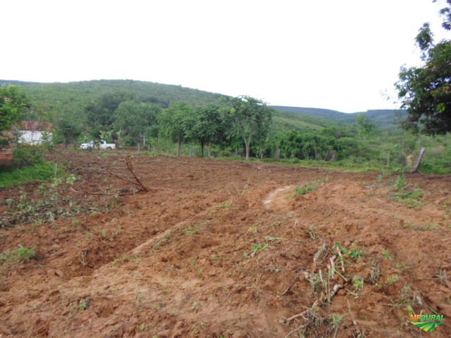 Fazenda Taiobeiras MG