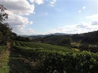 Fazenda de Café Sul de Minas Cambuquira