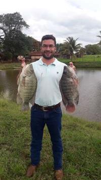 Peixes Tilápias