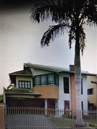 Vendo Palmeira Real adulta de 12 m aproximadamente