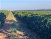 Assessoria Agronômica em Cafeicultura