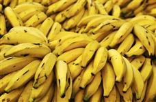 Banana Prata - Sou Fornecedor