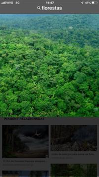 Florestas ( Madeiras, Torras, Manejo No Amazonas)