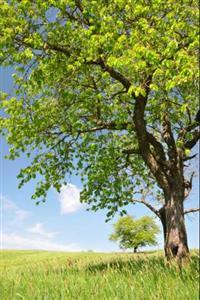Moringa Oleífera, a Árvore Milagrosa