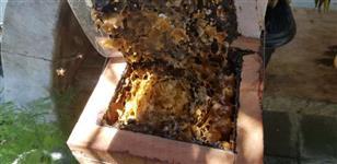 Enxames de abelha jataí