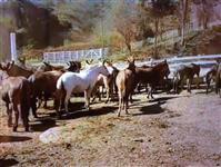 Tropa de burros e mulas