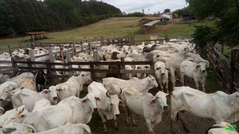 Fazenda Vocação Agrícola Pecuária