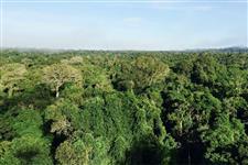 Belíssima Área para: Compensação Ambiental, Sequestro de Carbono e Produção de Madeira
