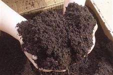 Adubo orgânico Bio Húmus de minhoca
