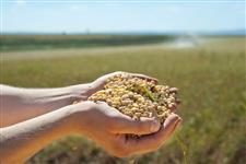 SOJA PARA EXPORTAÇÃO - GMO GRADE 2
