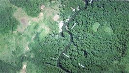 Fazenda com plantio de Castanha do Pará no Amazonas