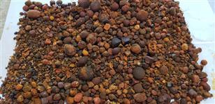 Compro pedras do fel bovino
