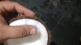 Coco seco do conde
