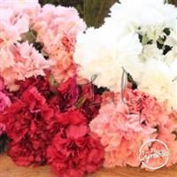 Flores de corte em geral
