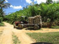 Fazenda 229ha com plantação e Fábrica de Palmito Pupunha.