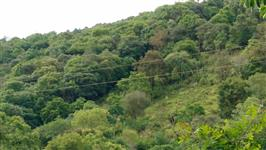 Area 33 hectares Reserva Ambiental