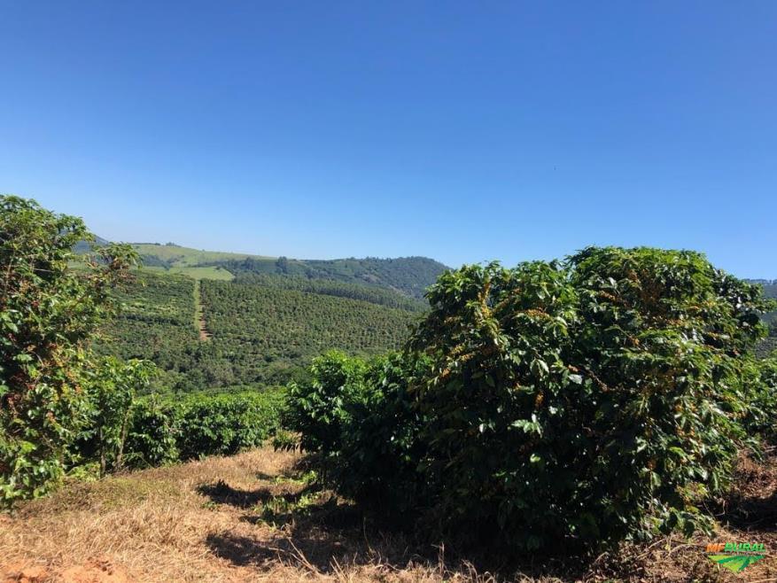 fazenda de café arábica
