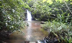 Sitio de 50 hectares em Bandeirantes - MS, a 32 km de São Gabriel do Oeste - na região da Mata Seca.