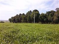 Fazendinha em Taquarivai-SP