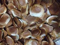 Venda de sementes de mogno Africano espécie Khaya Ivorensis
