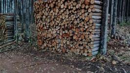 Lenha de eucalipto cortada e empilhada