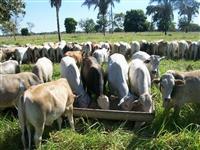 NUTRIBOV 120 - MINERALIZA A RAÇÃO E O SAL BRANCO DOS ANIMAIS