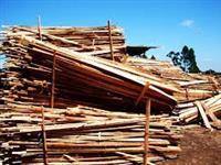 Compro mato em pé. Costaneira, refilos de madeira, torrete....