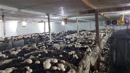 Cogumelos Frescos Champignon e Porto Belo