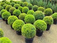 vendo vasos para produção de plantas