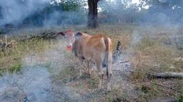 Fazenda no sudeste o Tocantins-aceito trato de esteira no negócio