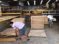 Necessito de tercerizar serviços de estufas  e comprar madeiras de Eucalipto seco grandis