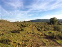 Vende 117 ha, propriedade com topografia mista, terra preta de muito boa qualidade