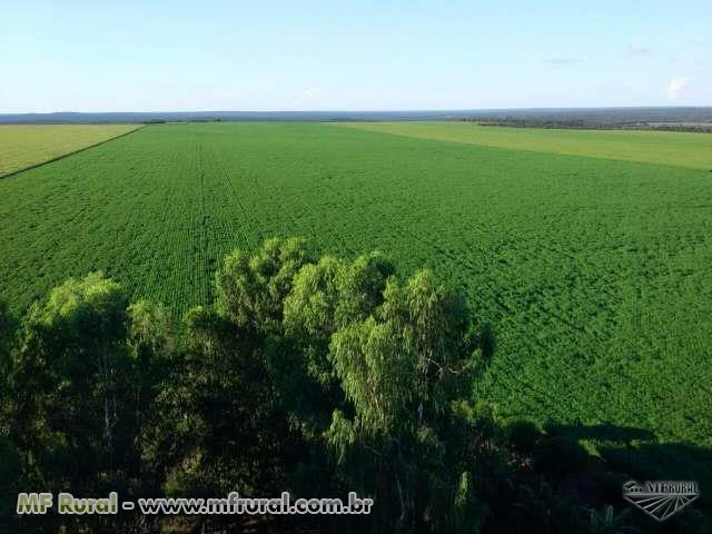 Excelente fazenda à venda em Sapezal - MT